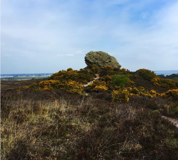 From March to August 2017, I took part in a Bournemouth university SERT, investigating if similar factors affect ecology and archaeology in heathland environments. During fieldwork we studied 18 heathlands, recording ecological features, such as vegetation composition, heath structure and age, indicators of animal presence and human disturbance. We also surveyed archaeological monuments present in the landscape and assessed the degree of damage present.