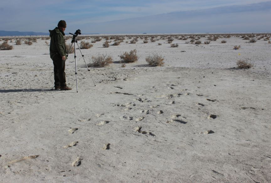 White Sand National Monument (WHSA) in New Mexico is an amazing place.  Not only is it the largest gypsum dune field in the World with a unique locally adapted fauna/flora but it also has the highest concentration of ice age vertebrate tracks (footprints) in the Americas.  We use high-resolution geophysics, photogrammetry and drones to prospect, map and preserve the tracks in 3D while using augmented reality to tell these stories to visitors to the monument. This is an ideal project for those interested in Quaternary Geology, palaeo-environmental reconstruction, archaeology and behavioural ecology.