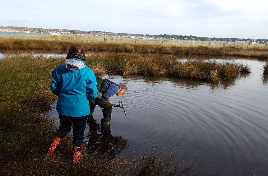 My dissertation involved surveying a newly described lagoon and comparing the biodiversity with other lagoons in Poole Harbour and ascertaining its potential as climate change refugia. It revealed that new Seymer's lagoon was a degraded lagoon habitat with insufficient water exchange, promoting eutrophic conditions inhibiting benthic species diversity. Improving the water quality would increase benthic biodiversity, and thus prey availability for waterfowl that are at risk of habitat loss.