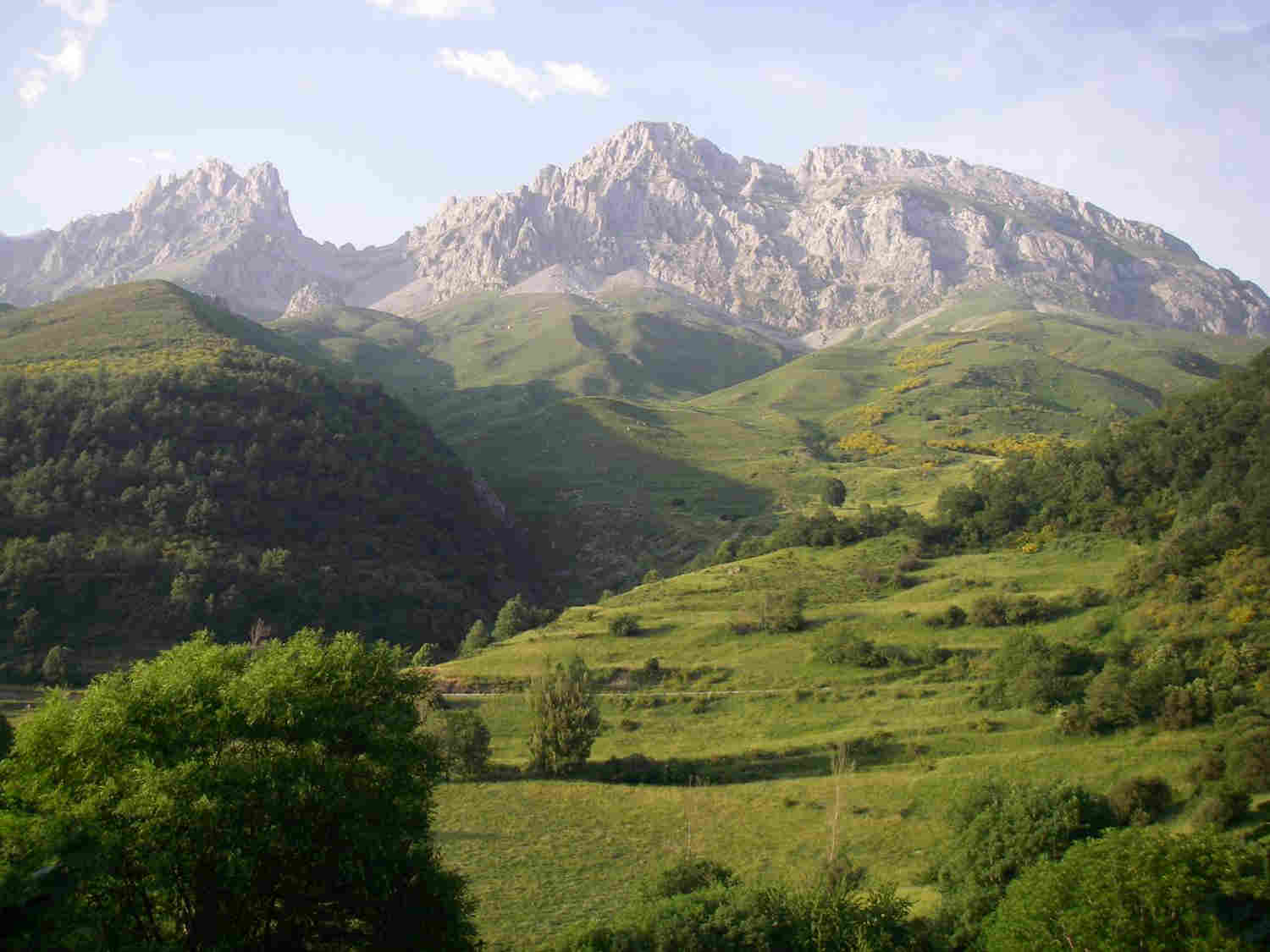 This project will investigate some key ways in which understanding the effect of environmental change on the ecological interactions between, plants, invertebrates, birds and mammals can inform the conservation of alpine heathlands and forest ecosystems. The Picos de Europa National Park is outstanding in terms of its high diversity of species and is also a particularly important Spanish stronghold for two high conservation value species that use alpine heaths and forests - Capercaillie (big rare birds!) and Brown Bear.