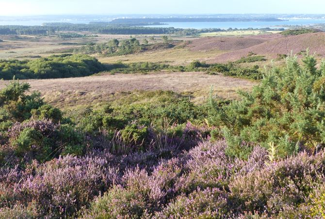 "The Dorset Heaths are internationally special and this SERT works with the National Trust ""Wild Purbeck"" vison to re-connect heaths by the exciting creation of the UK's first landscape –scale National Nature Reserve, the new Purbeck Heaths NNR.  The aim of this SERT is to measure monitor changes in wildlife living in the heaths in response to changing environments and conservation management."
