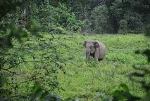 Indonesia's deforestation rate has exceeded even that of Brazil and the critically endangered Sumatran elephant which has a last stronghold in the Leuser Ecosystem, Sumatra, is facing extinction. We have funding to support the delivery of new habitat management strategies